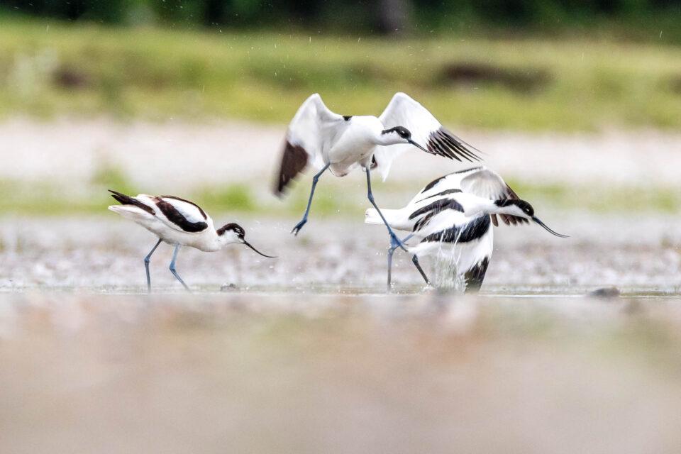 Mladí dospívající a velké ptáky