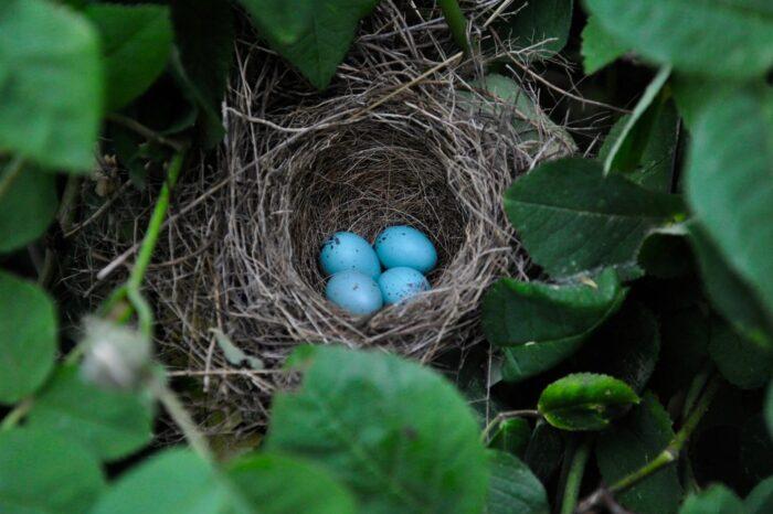 Nevylíhnutí ptáci varují své sourozence před nebezpečím vibracemi skořápek