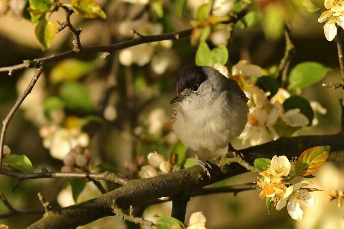 Klimatická změna ovlivňuje migraci ptáků v jižním Norsku
