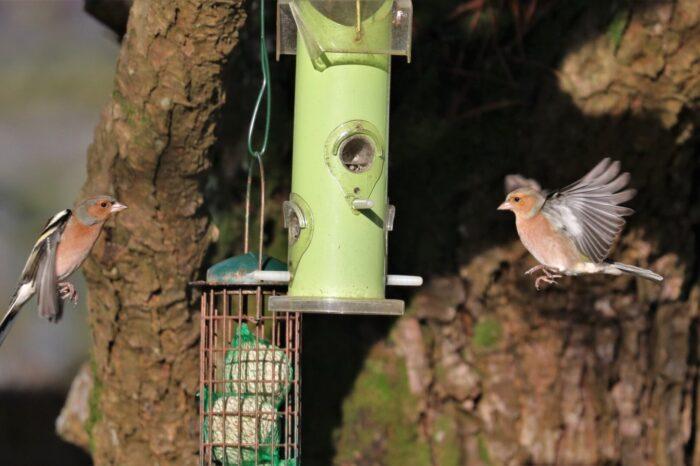 Celoroční přikrmování ptáků – fakta a mýty v české kotlině
