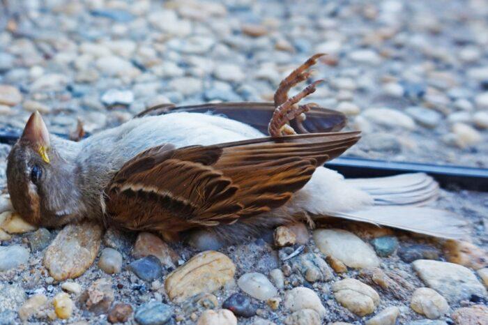 Blíží se Global Bird Rescue, lidé budou pátrat po skleněných plochách, které zabíjejí ptáky