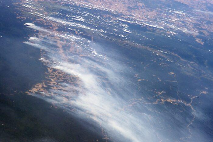 Požáry v Amazonském pralese devastují biotopy ohrožených druhů