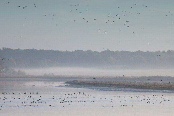 Na Bohdanečském rybníku se lidé loučili s ptáky
