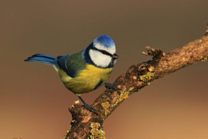 Kvalitní ptačí krmítko by mělo nabízet pestrou stravu