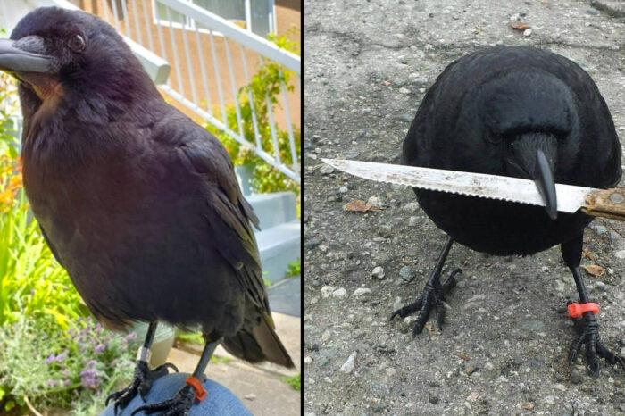 Zmizení kanadské ptačí celebrity rozdmýchalo silné emoce
