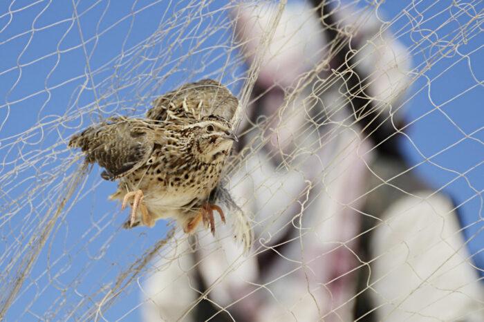 Studie odhalila rozsah nezákonného lovu ptáků na Blízkém východě