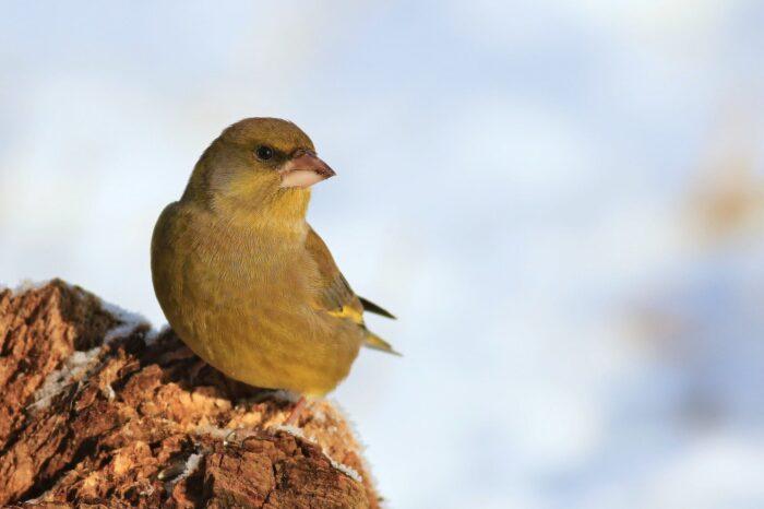 Péčí o ptačí krmítko předcházíte šíření chorob mezi ptáky