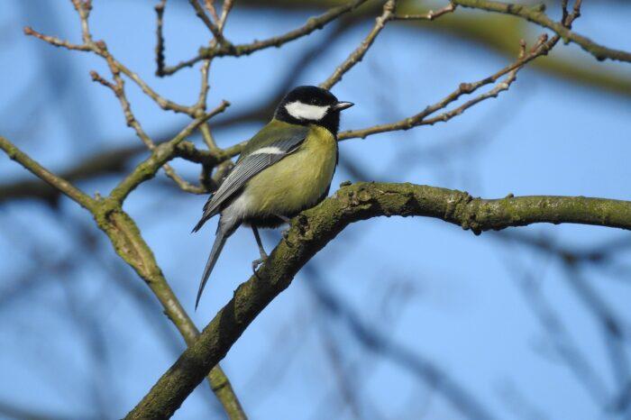 Češi budou znovu sčítat opeřence. Který pták je na krmítku nejčastější?