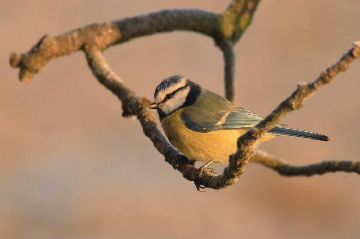 Přikrmování pomáhá nejen ptákům, ale i lidem