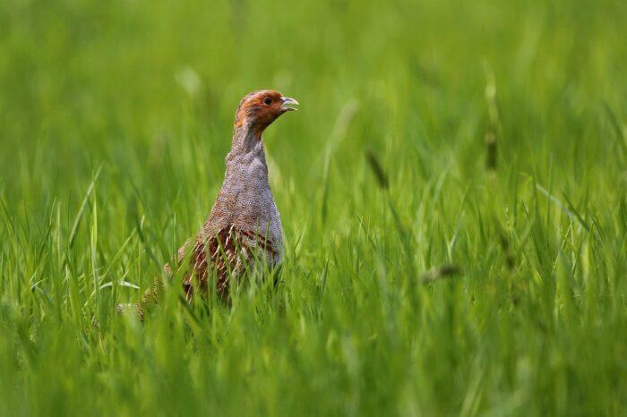 Ornitologové a myslivci předali ministrovi zemědělství petici, žádající zemědělství ohleduplné k ptákům