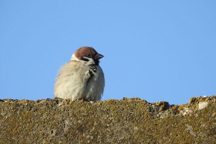 Vyhýbají se ptáci vaší zahradě? Zjistěte proč.