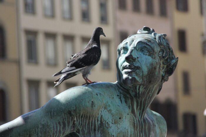 O holubech a lidech: holubi se vracejí a zůstávají