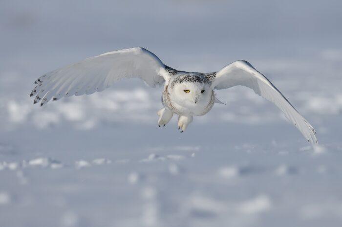 Mírná kanadská zima ovlivňuje druhové složení ptáků