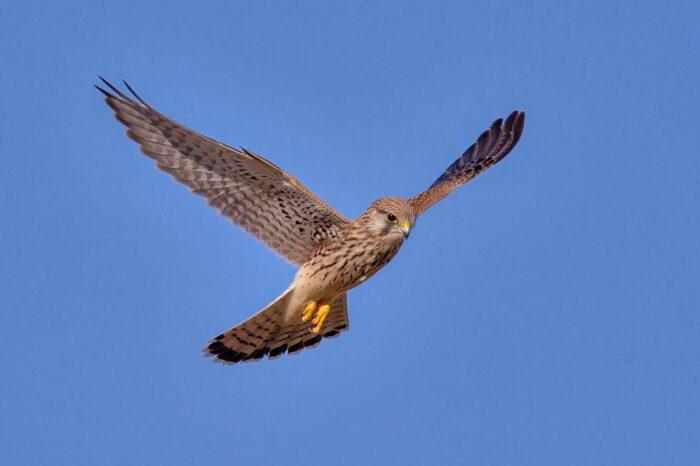 Bude povolena aplikace jedu proti hrabošům na povrch půdy. Ornitologové opět upozorňují na nebezpečí!