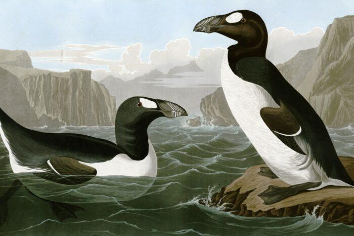 Ochrana snižuje riziko vymírání ptáků, přesto vyhynulo za posledních 500 let 187 druhů