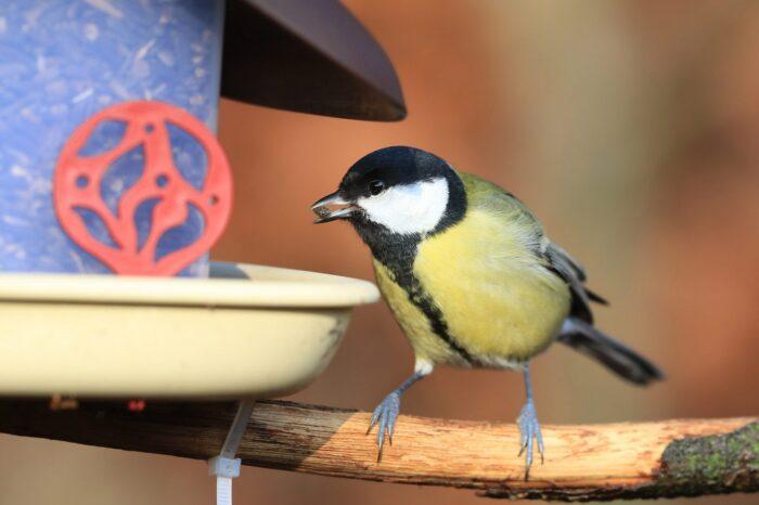 Přes 15 tisíc dobrovolníků sčítalo ptáky na krmítkách