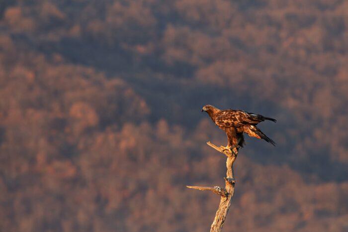 BirdLife International vyzývá k zařazení zdravého životního prostředí mezi základní lidská práva. Přidáte se?