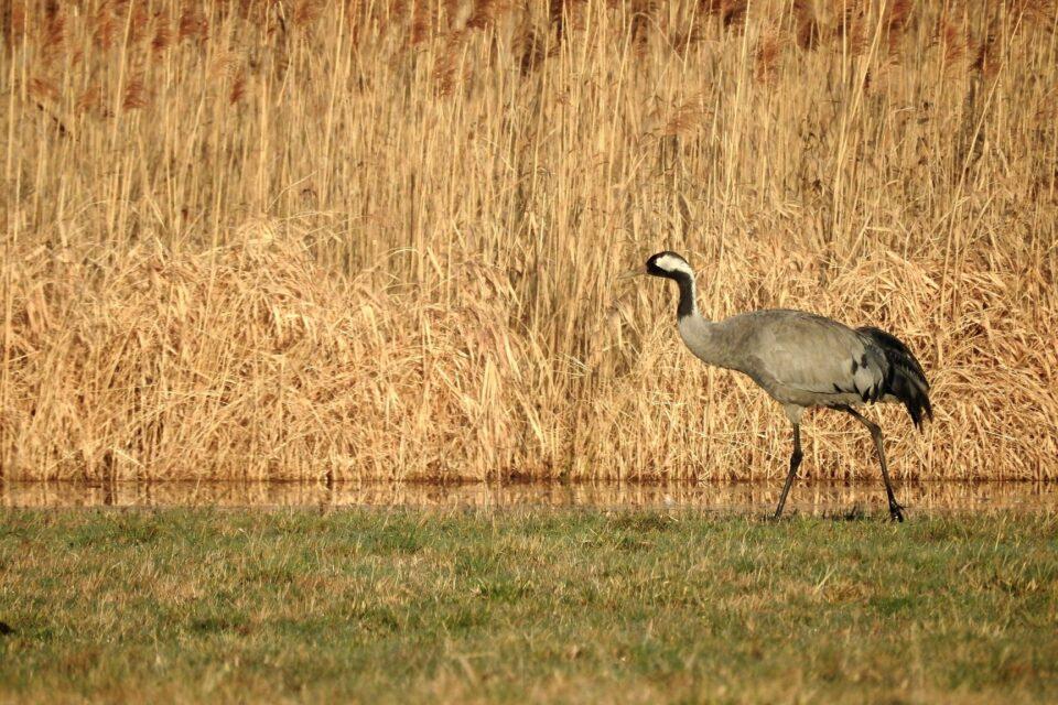 Sedmá mezinárodní ornitologická konference ve východních Čechách se blíží