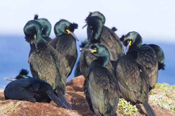 Vláda projedná změny v dohodě o ochraně vodních ptáků (AEWA)