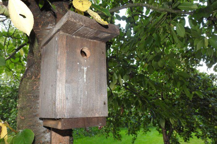 Míra urbanizace má vliv na hnízdění ptáků