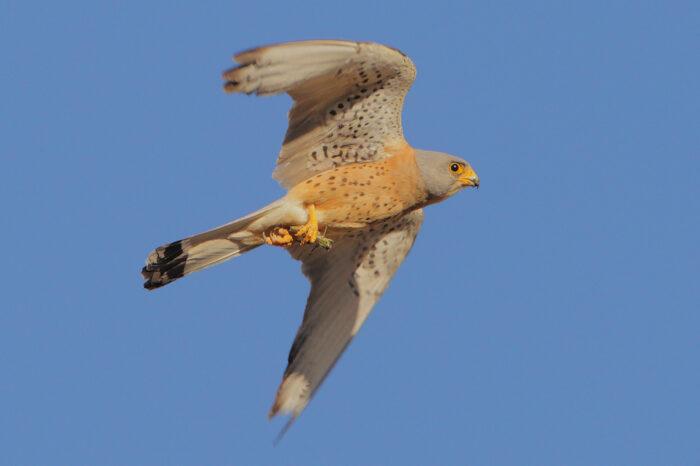 Instalace hnízdních budek může ptákům přinášet i negativa