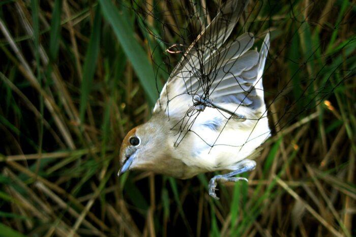 44. ročník kroužkování ptáků na Řežabinci začal