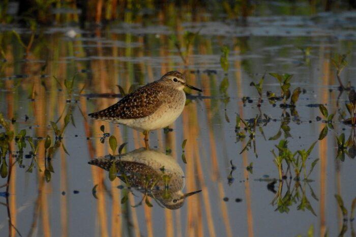 Polní mokřady jsou oázy pro ptáky. Deštivé počasí vrací vodu do krajiny