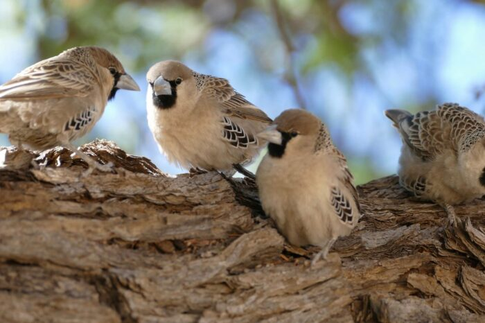 Identifikace ptáků pomocí konvoluční neuronové sítě