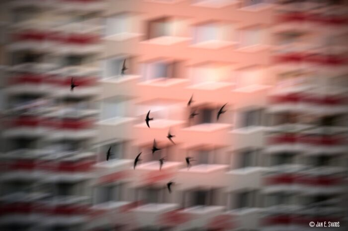 Jan E. Svatoš dokončil Neviditelné ticho, film o mizejícím ptactvu uvede Česká televize