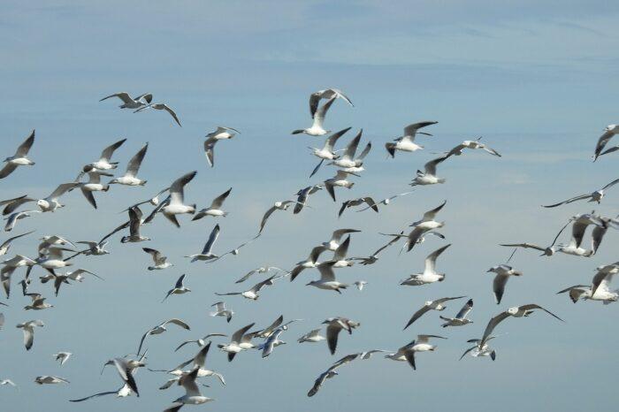 Evropský festival ptactva 2020 proběhne i v Tovačově