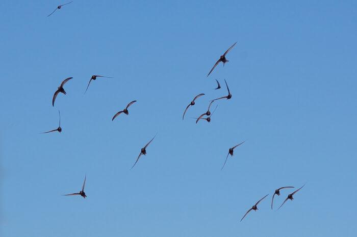 Nový film Jana E. Svatoše o ubývajících ptácích Neviditelné  ticho