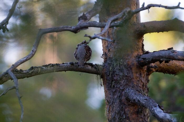 Ochránci přírody vybudovali na Šumavě naučnou stezku věnovanou jeřábkovi