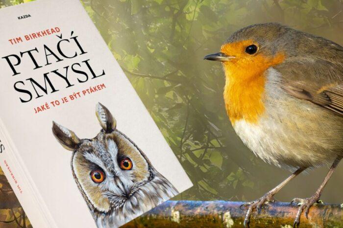Tim Birkhead zve do fascinujícího světa ptačích smyslů