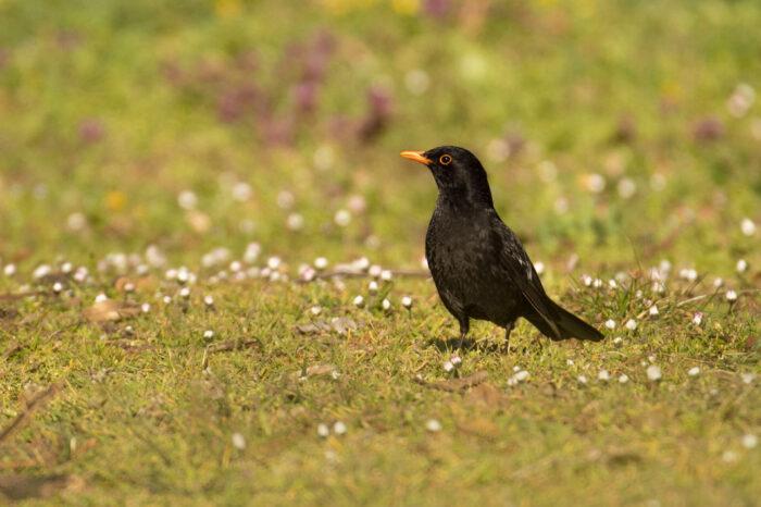 Jak ptáci přišli ke svým jménům?