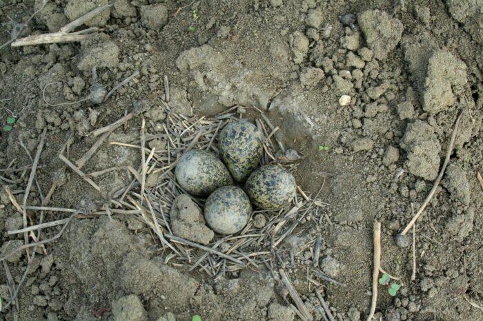 Jak může moderní technologie pomoci v ochraně ptačích hnízd?