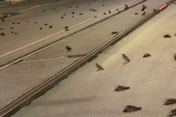V Římě v důsledku novoročních ohňostrojů uhynuly stovky ptáků