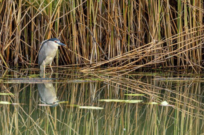Ornitologové zjistili v roce 2020 v Ptačím parku Kosteliska přes sto šedesát ptačích druhů