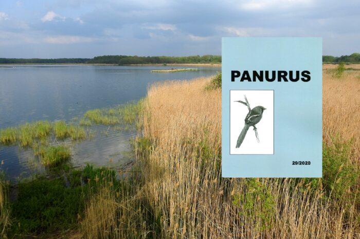 Vyšlo 29. číslo ornitologického časopisu Panurus