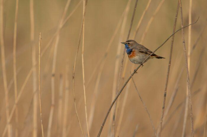 Sečení rákosu v Přírodní rezervaci Nový rybník u Líní pomůže ptákům