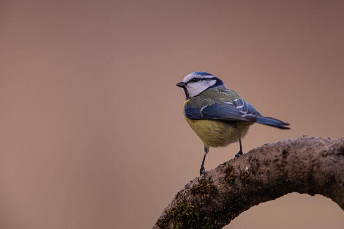Trutnovští nabídnou ptákům ve městě k hnízdění více než 200 budek