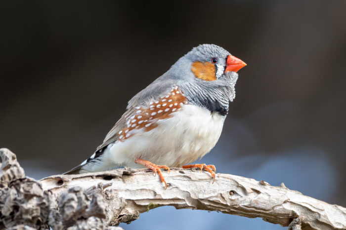 Hluk z dopravy ovlivňuje kognitivní schopnosti ptáků