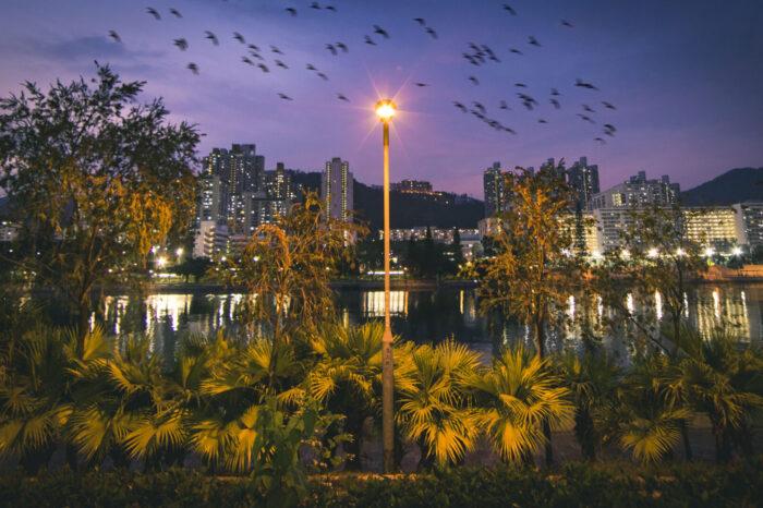 Umělé osvětlení urychluje nástup ptačí migrace