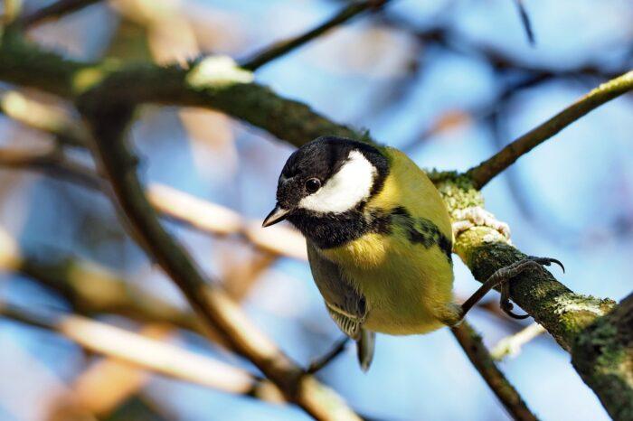 Výsledky sčítání ptáků na krmítkách v lednu 2021 jsou známé