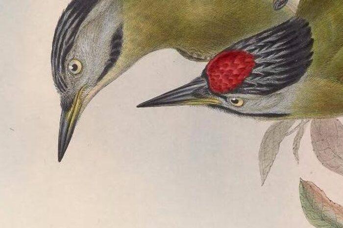Slezská ornitologická společnost vyhlašuje výtvarnou ptačí soutěž pro děti