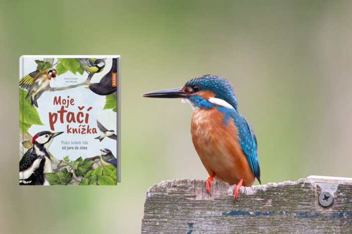 Moje ptačí knížka představí svět ptáků nejmenším čtenářům