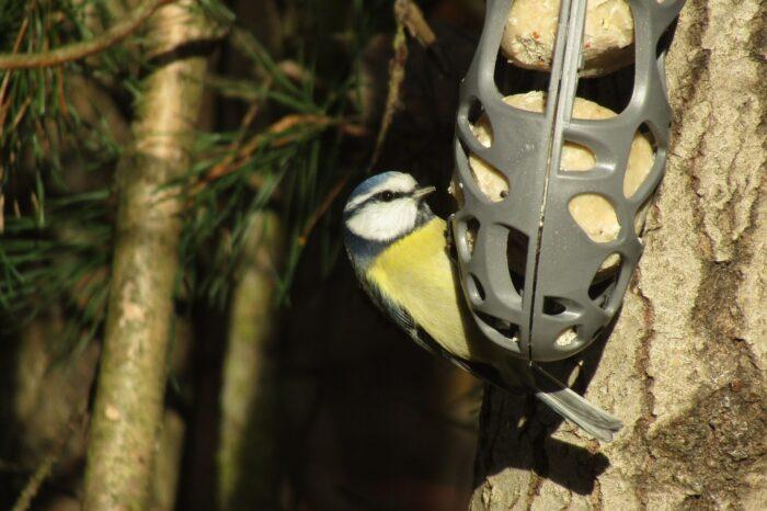 Krmení ptáků - jen v zimě, nebo celoročně?