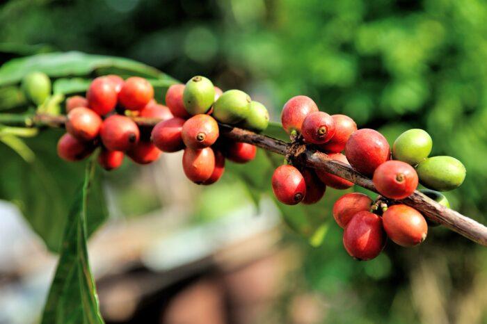 Bird Friendly Coffee – káva s aromatem ptačího blahobytu